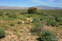 Invasive Plants in the Sonoran Desert | Wild Sonora | GarryRogers NatCon News | Scoop.it