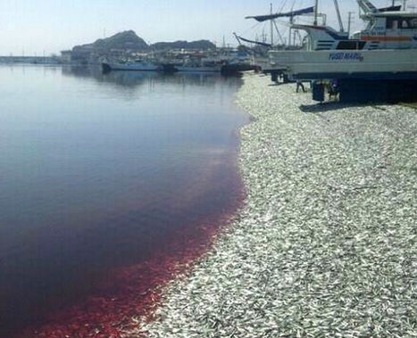 That's Not Sand, It's a Beach of Dead Fish - Discovery News | Water Stewardship | Scoop.it
