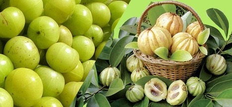 Garcinia Cambogia benefits : Reviews and success stories!   Wonders of weight loss motivation   Scoop.it
