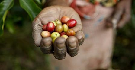 Rwanda and Mexico Become First Countries to Commit to Sustainable Coffee Challenge | Ecosystèmes Tropicaux | Scoop.it