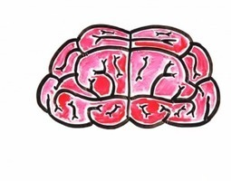 The 7 biggest myths about your brain | EarthSky.org | fitness, health,news&music | Scoop.it