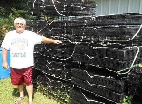 DNREC issues shellfish aquaculture regulations - By Chris Flood   Hassan   Scoop.it