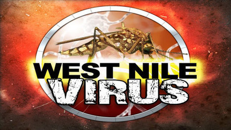 First West Nile Virus Positive Mosquitoes in Illinois For 2013 R - News and ... - KWQC 6 | West Nile Virus | Scoop.it