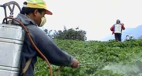 Algérie - L'utilisation abusive d'insecticides déséquilibre l'écosystème de la plaine du Chéliff | EntomoNews | Scoop.it