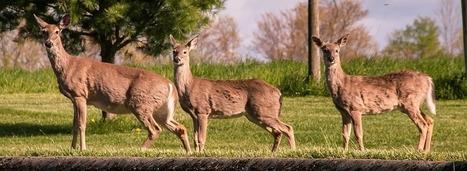 Comment est-on indemnisé en cas de collision avec un animal sauvage ? | assurance temporaire | Scoop.it