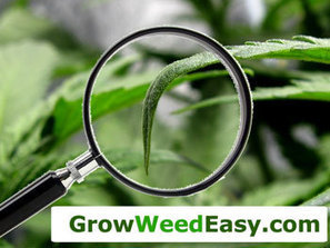 """Does Your Plant Have """"The Claw?"""" 
