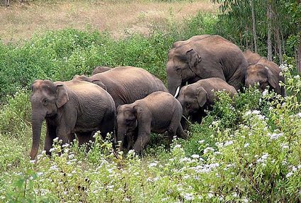 Six elephants mowed down by speeding train in Bengal | Wildlife and Environmental Conservation | Scoop.it
