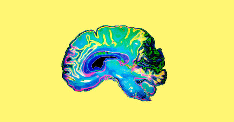 Scientists Can Now Predict Intelligence From Brain Activity | Chasing the Future | Scoop.it