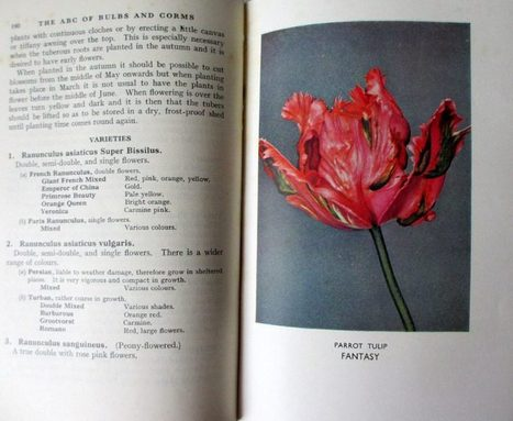 The A.B.C. of Bulbs and Corms by W.E. Shewell-Cooper. H & S Ltd., 1948. 1st Edn. | Emerging Plant Viruses | Scoop.it