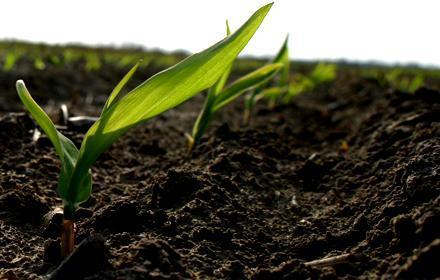 Record-high U.S. corn plantings in 2013 | Food Security | Scoop.it