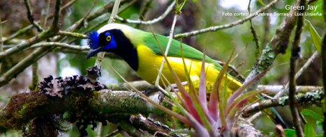 Observación Fauna y Flora en Colombia | la web y el medio ambiente | Scoop.it