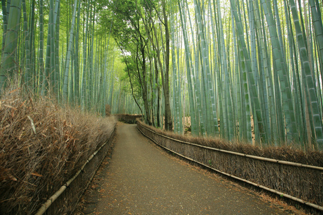 The Famous Bamboo Forest of Sagano | Visual & digital texts | Scoop.it