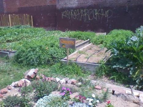 URBAN COMMUNITY GARDEN AGROBIODIVERSITY AND CULTURAL IDENTITY IN PHILADELPHIA, PENNSYLVANIA, U.S.A - American Geographical Society | jardins partagés | Scoop.it