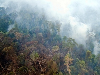 Indonesian forest fires on track to emit more CO2 than UK | Environment | The Guardian | Confidences Canopéennes | Scoop.it