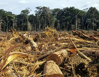 Brasil subasta su selva tropical–RT   LA DESFORESTACION DE ARBOLES   Scoop.it