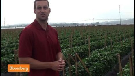 California Drought Transforms Global Food Market | Sustain Our Earth | Scoop.it