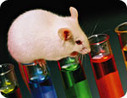 Rat study throws new light on animal consciousness - rats behave with empathy | The Nature of Reality | Scoop.it