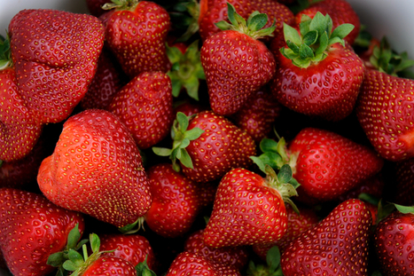 State Farmers Market plans sweet treats for Strawberry Day May 3 | NCDA&CS News Release | North Carolina Agriculture | Scoop.it