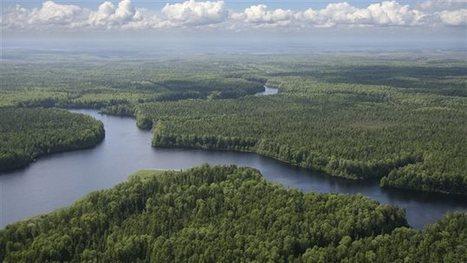 Le réchauffement climatique menacerait les forêts boréales   Biodiversité   Scoop.it