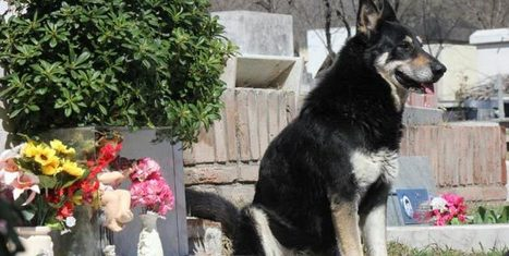 A dog has slept next to his owner's grave for 6 years. No one ever showed him where it was!   READ WHAT I READ   Scoop.it