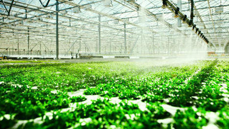 The Internet Of Things Meets Hydroponics: How To Grow A Better Vegetable | Smart Cities | Scoop.it