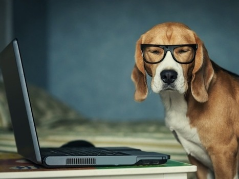 Search and Social — Is the Tail Wagging the Dog? | MarketingHits | Scoop.it