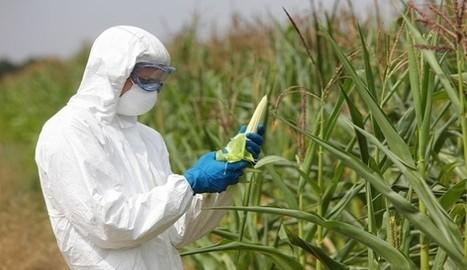GMO Contamination Lawsuit Failure Renews Farming Fairness Debate | Anonymous tokyo news | Scoop.it