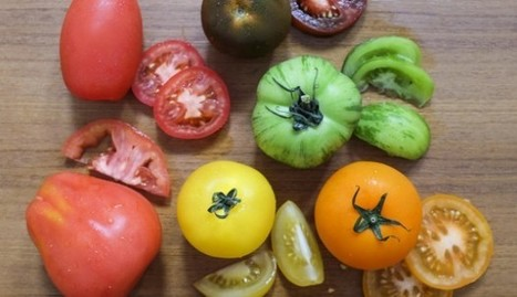 Why tomatoes are such a wonder food, and ways to get best out of them - South China Morning Post (subscription) | Your Food Your Health | Scoop.it