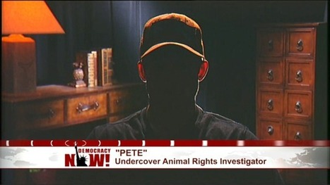 "Undercover Activist Details Secret Filming of Animal Abuse & Why ""Ag-Gag"" Laws May Force Him to Stop 