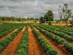 Technology for producing hybrid seeds vital: FAO-UN - Economic Times | NGOs in Human Rights, Peace and Development | Scoop.it