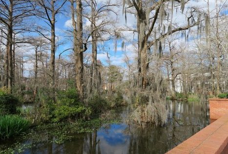 Things to do in Lafayette, Louisiana | Travel | Scoop.it