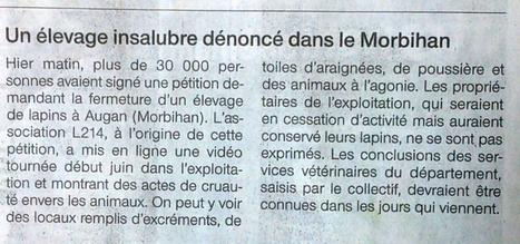 Un élevage insalubre dénoncé dans le Morbihan / Ouest France   Lapins - Revue de presse L214   Scoop.it