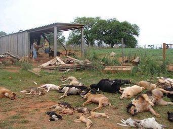 Medida absurda incentiva maus-tratos a cães | Meio ambiente | Scoop.it