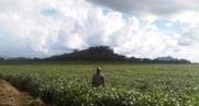 Afrique : Les dépenses consacrées à l'agriculture ont augmenté de ...   Sustainable agriculture in ACP countries   Scoop.it