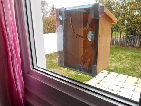 Adventures With The Cronks: My Spy Birdhouse - A Review | MySpy Birdhouse | Scoop.it