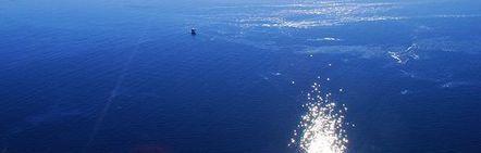 Marée noire en Floride : trois ans après, un bilan catastrophique sur l'écosystème... | La préservation de l'environnement marin | Scoop.it