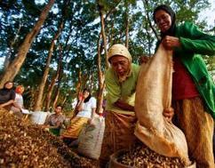 Indonesia Extends its Forest Moratorium: What Comes Next? | WRI Insights | The Glory of the Garden | Scoop.it