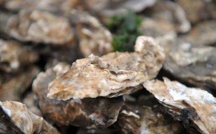 Consommation interdite des huîtres et coquillages du bassin d'Arcachon | Actualité de l'Industrie Agroalimentaire | agro-media.fr | Scoop.it
