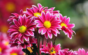 What is the significance of flowers in life? | singapore florist | Scoop.it