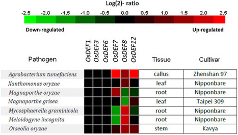 Two novel antimicrobial defensins from rice identified by gene coexpression network analyses | Rice Blast | Scoop.it