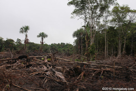 Norway, Colombia target partnership to save rainforests | Lauri's Environment Scope | Scoop.it