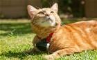 'CatCam' could vindicate pets accused of killing birds - Telegraph.co.uk | Pet News | Scoop.it