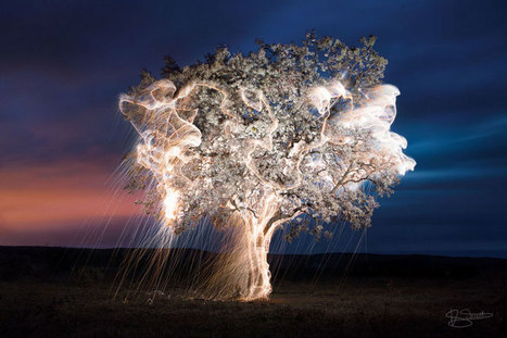 Light Drips From Trees In Long-Exposure Photos By Vitor Schietti | Bored Panda | Image et multimédia | Scoop.it