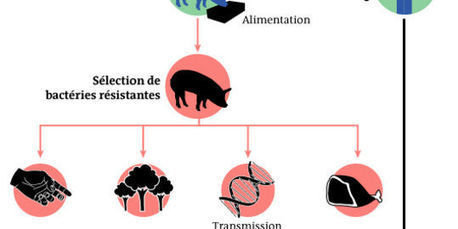 Antibiotiques: gare à la surdose animale | Les sciences au lycée | Scoop.it