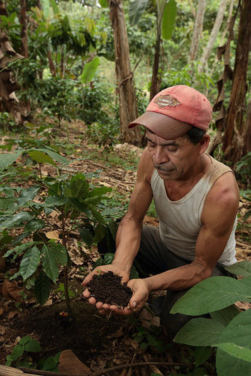 Soil Management:  Coffee Digs Good Dirt | Coffee News | Scoop.it