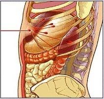 Abdominal trauma: Dealing with the damage | PMSC 13005 - Abdominal Trauma | Scoop.it