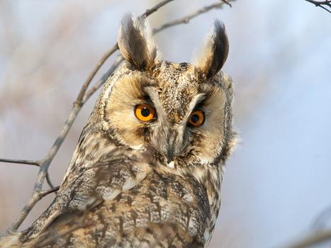 Birdwatching's Digital Crisis   birding   Scoop.it
