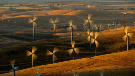 A Struggle to Balance Wind Energy With Wildlife | Sustain Our Earth | Scoop.it