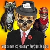 Talking Dog Reporters in Your Community - PR.com | The Dog Connection TV | Scoop.it