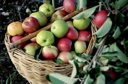 Antibiotics in Organics -- News from Portland, Clarifications and Amplification   Pacific organic agriculture   Scoop.it